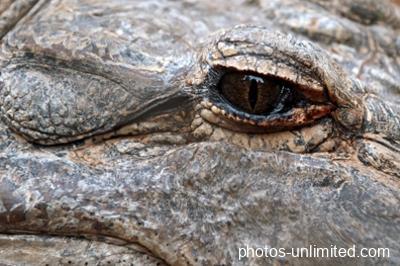 2-03-croc