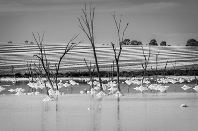 2-12-salt-field-australia