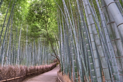 2-18-bamboo-forest-japan