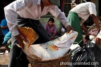 4-13-loading-the-purchase-yangon-myanmar