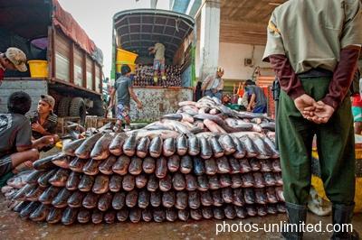 4-18-stacking-the-fish-yangon-myanmar