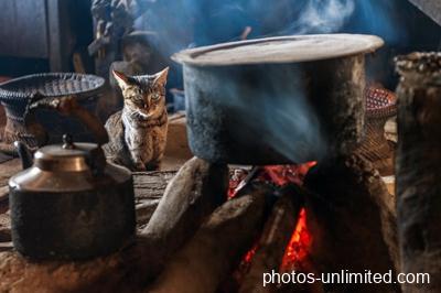 6-20-cat-next-to-a-hot-tin