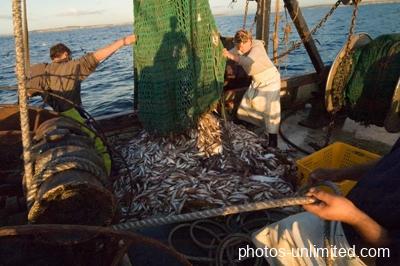 7-19-ocean-catch-australia