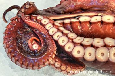 8-08-octopus-still-life